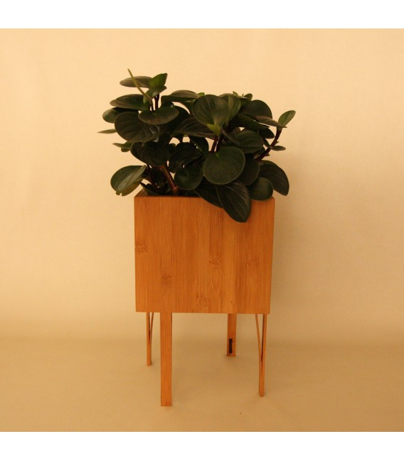Bloooms Plant Pot BB
